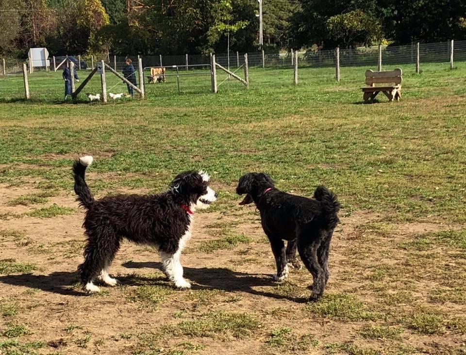 Kemptville Ferguson Forest Dog Park